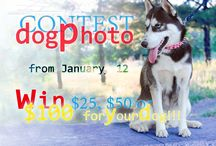 Our #Dog #Photo #Contest Stars / Take part in our current Dog Photography Contest and win presents! Vote for your favorite #dog images! / by ForDogTrainers.com