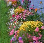 gardening / by Lana Findlay