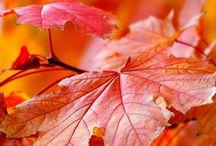 Seasons / by Heidi Muehle
