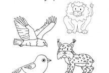 Staal groep 5 dierentuin