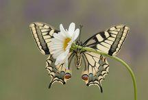 Photo - butterflies