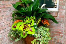 shade containers 12