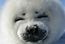 BABY SEALS / My new spirit animal