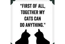 My cats, dog, chikens and all the staff around me