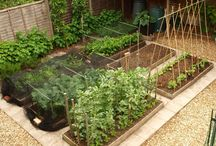 Herbs, veggie patches and veg-pot ideas