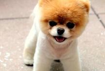cutee!