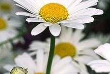 ".flowers"""