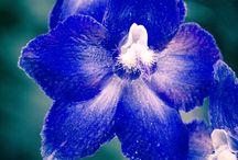 Foto Natura e Fiori / Foto di fiori e natura
