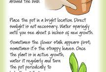GREEN IS GOOD / Growing plants