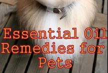 Healthy Pets {Essential Oils} / Keep your pets healthy with essential oils! / by Shanti | Life Made Full