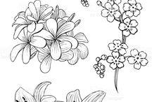 Dibujos botánicos