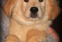 Cute puppy's by Lexi