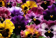 Natural Flowers are Tizzerts Flowers / We only decorate our cakes with the colors of flowers found in nature!