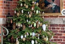Holiday - Tis The Season!! / by Carla Hinze