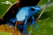 Amazing Amphibians / From rare to colorful, come spend some time with these amazing little (and not-so-little) animals.