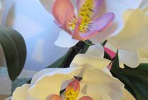 Cukor orchideáim / cukorból készült alkotásaim.