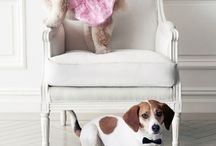 """Wedding Party Pets / Now who can deny these adorable little faces?! The wedding day should include your furry little family members, because pets have the keys to our hearts like no other. So we're sharing the cutest wedding pet moments that will make you go, """"Awwwwww!"""""""