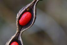 seeds and pollen