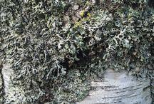 Luonnon ihmeitä ja muuta löydettyä / Tutkimusretket luonnossa
