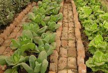 ideas for vegie garden