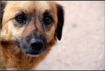 PAphotografy - 3 - DogShow / Dogshow - Cães ;)