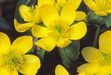 Bank planting for Summerford / Plants for banks under oak trees in woodland garden