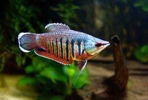 Inne ryby