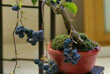 Množíme rostliny