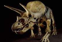 TRICERATOPS LOVE