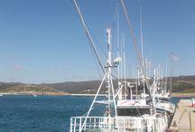 Barcos de pesca Artesanal