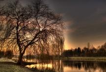 Tree Hugger / Just because I love trees. / by Valerie Thorpe