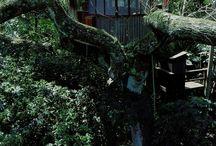 treehouses / by Amanda Mello