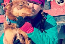 Monica Zappa - Iditarod 2014 Rookie / To celebrate Togo and the Iditarod, we sponsored rookie Monica Zappa of Kasilof, Alaska. Monica completed her first Iditarod in 13 days and 6 hours, finishing 47th place!