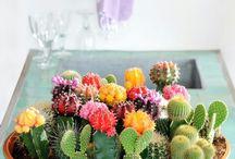 plants / by Hunter Schmuck