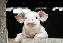 Animals that make me smile