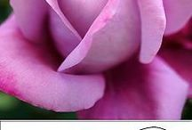 Фоамиран-цветы
