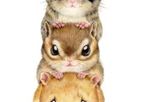 Rodents / All about rodents