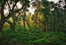 Coorg homestay