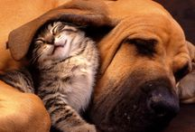 Animal friendships / We can all learn a lot from the animal kingdom.