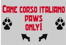 cane corso italiano webshop / https://www.facebook.com/Corso3signs/