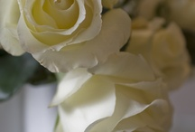 THE BEAUTY OF WHITE / by Deanna Neiger