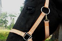 Horse Misc