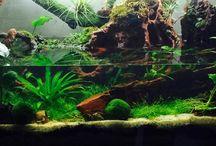 Shrimp tank / Shrimp tank