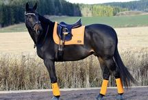 HorseGloss: Horse set
