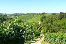 Malabaila di Canale / Sono vini del Roero dall'ascendenza nobile quelli prodotti da Malabaila di Canale nel Castelletto, in provincia di Asti.