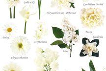 Floral Inspiration / SSS inspiration