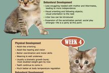 Kittens Week