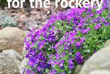 Rockery gardening