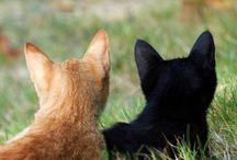 Koty,Koty i jeszczeraz koty.
