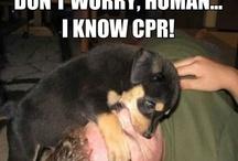 CPR - Humorous